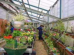 Los invernaderos y las floras del municipio son la principal fuente de empleo para los facativeños
